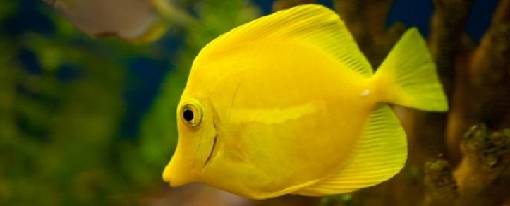 fish_1884107_small